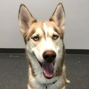 Dog of the Week